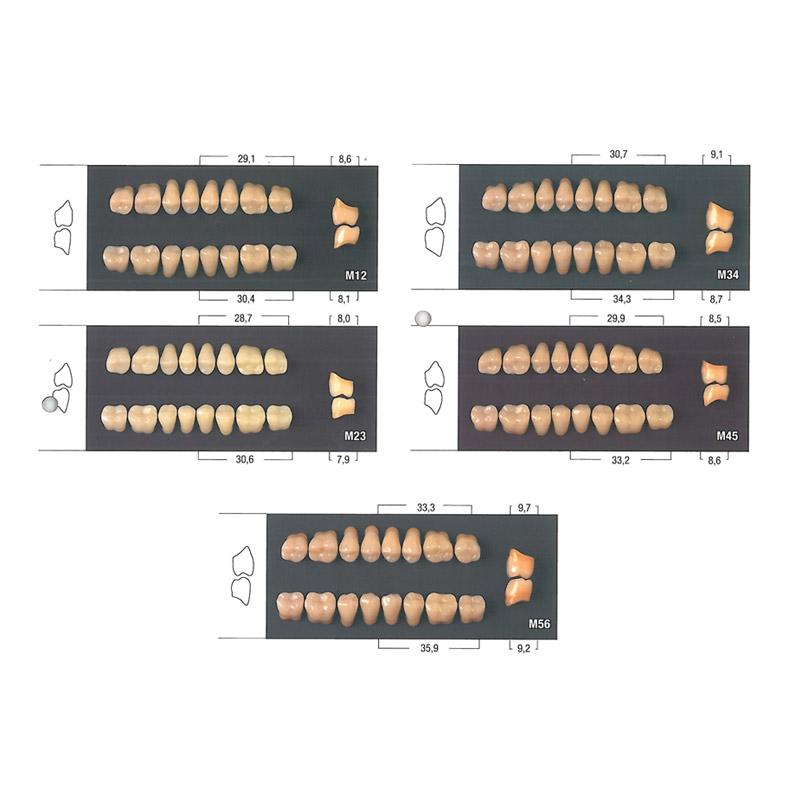 Guia de tamaños para los dientes artificiales posteriores de odimax