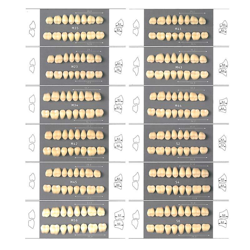 Guia de tamaños para los dientes artificiales posteriores superiores e inferiores de odipal